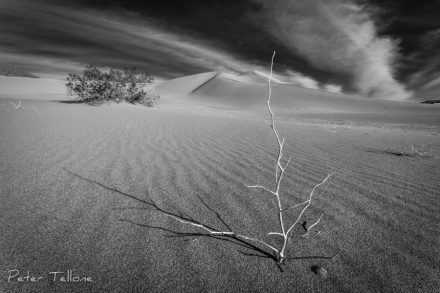 Death Valley, Ibex Dunes, Sand Dunes, Fine Art prints, Black and White, The Mojave