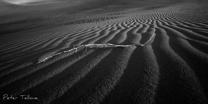 Photo of A Branch amongst the dunes in Death Valley National Park Fine Art prints