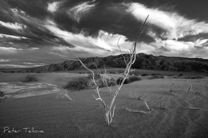 A tree at Mesquite Dunes, Death Valley National Parkseems to be conducting the movement of the clouds in a swirling symphony