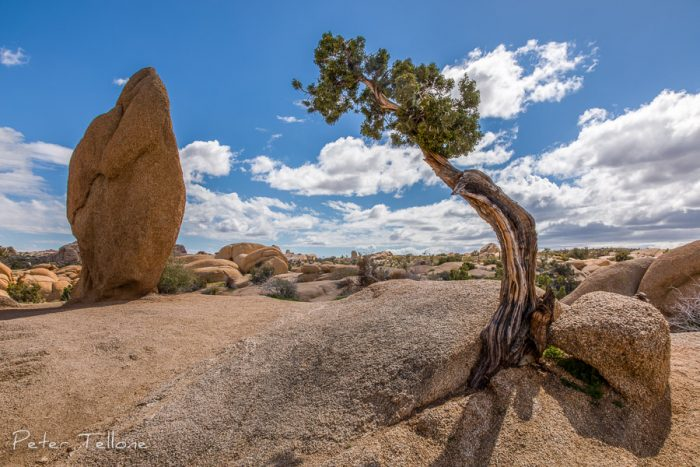 The famous Monolith and Juniper Tree in Joshua Tree National Park